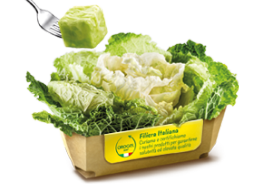 Savoy Cabbage Portions