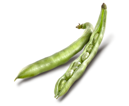 how to cook frozen broad beans